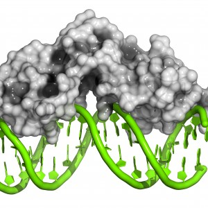 'Genome Guardian' May Prevent Development of Friedreich's Ataxia, Other Neurological Disorders