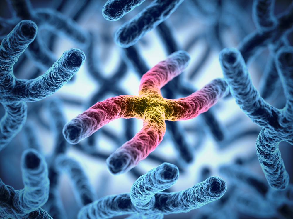 Researchers Find Friedereich Ataxia Gene is Prone to Chromosome Fragility