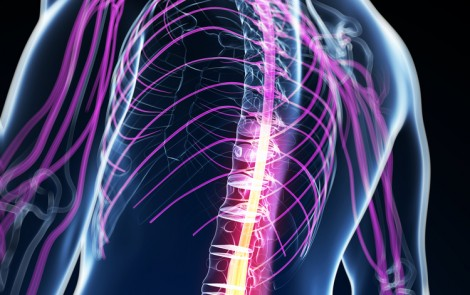 Atrophy Along Spine and in Specific Brain Areas Linked to Clinical Decline in FA Patients, Study Reports