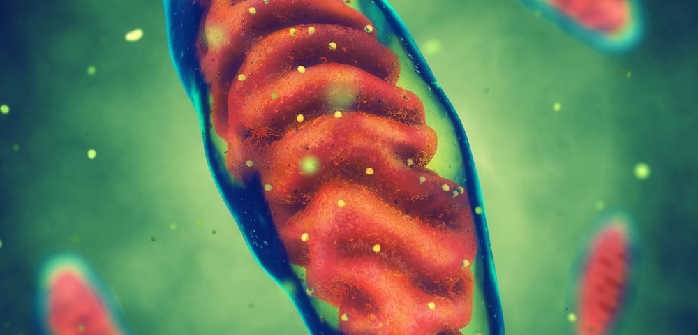 Researchers Develop New Way to Measure Mitochondrial Function in Muscle