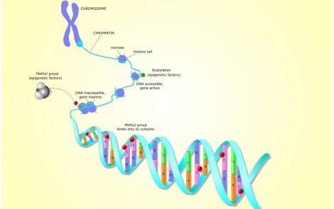 Suppressing Two Gene-silencing Enzymes May Hold Promise in FA, Study Shows