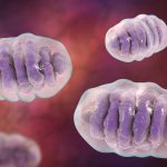 frataxin and mitochondria study