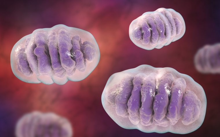 Antioxidants Increase Frataxin Levels in Friedreich's Ataxia Cells, Study Reports