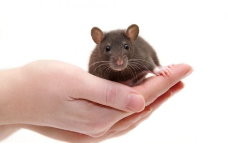 FXN Gene Therapy Treats Heart Problems in New FA Mouse Model